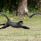 Baby Monkey Sequence by Brad Francis