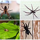 SPIDERS IN THE GARDEN AND HOUSE by Heidi Mooney-Hill