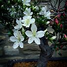 Flowering Bonsai  by Rewards4life