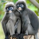 Dusky Monkeys by Brad Francis