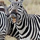 Somthing funny??? by Brad Francis