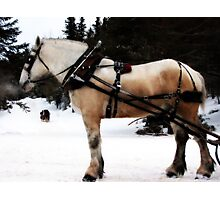 Sleigh Ride Photographic Print