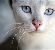 One of my cats by Maria Panagiotidi