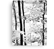 Early Summer in Monochrome Canvas Print