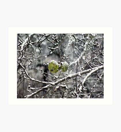 Seasons Changing in Vermont Art Print
