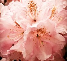 Spring Blooms in Massachusetts by kflanary