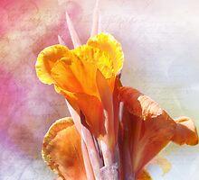 Summer Sunset by Elaine  Manley
