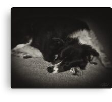 Sleeping Dog Canvas Print