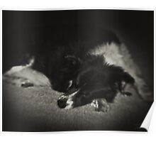 Sleeping Dog Poster