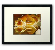 THE GOOSEBERRY - Physalis Solanaceae Framed Print