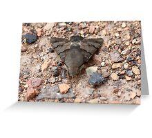Humming Bird Hawk Moth Greeting Card