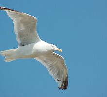 The Last Seagull I Will Ever Photograph (promise) by jason21