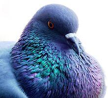 Colours on Wings by irwin barneto