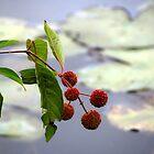Wild flowers of the marsh by vigor