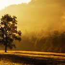 Morning Light by Jane Best