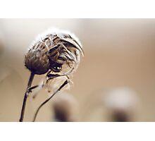 Winter Impressions Photographic Print
