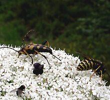 Pollen Party by SophiaDeLuna
