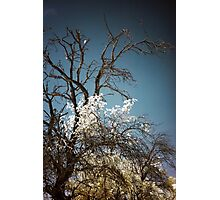 Infrared III Photographic Print
