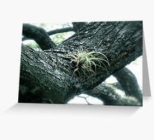 New Growth-St. Kitts, Eastern Caribbean Greeting Card