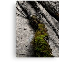 Living Stone - Penrhyn Castle Canvas Print