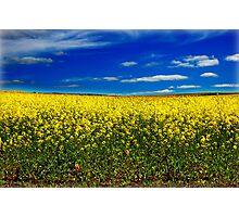 Yellow & Blue Photographic Print