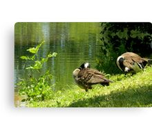 Hanging Out By the Little Green Pond Canvas Print
