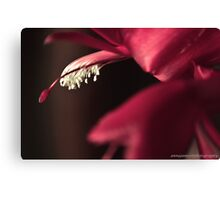 love is red Canvas Print