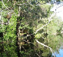 Noosa River Everglades - Reflections 4 by Sammy Nuttall