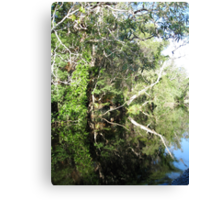 Noosa River Everglades - Reflections 4 Canvas Print