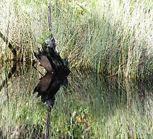 Noosa River Everglades - Reflections 6 by Sammy Nuttall