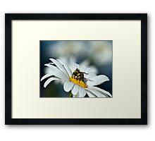 Bee on Daisy Framed Print