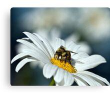 Bee on Daisy Canvas Print
