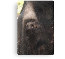 HERE'S LOOKING AT YOU ! Canvas Print