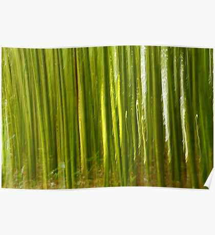Nature bamboo abstract Poster