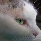A Cat's Name by Ginny Schmidt