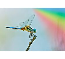 Rainbow Dragonfly Photographic Print