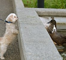 I'm a Duck...What Kind of Animal Are You? by Carol Clifford