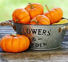 Squashes in a basket by Dipali S