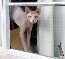 Opal Looks Out the Window by Glennis  Siverson