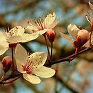 It's Spring by Kitsmumma