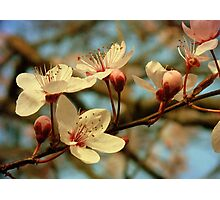 It's Spring Photographic Print