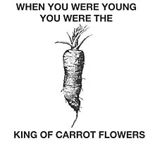 King of Carrot Flowers Photographic Print