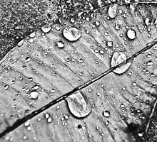 B&W tears some moment: Featured work: 1.The-magic-of-black-and-white-Group 2.The-silky-touch Group 3.Blackand white photography-4you Group by Kornrawiee