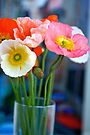 Glass of Poppies by Renee Hubbard Fine Art Photography