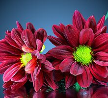 Maroon Flowers by Dipali S