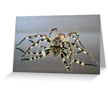Soft Under Belly Greeting Card
