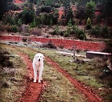 Pyrenean Mountain Dog by Rob Price