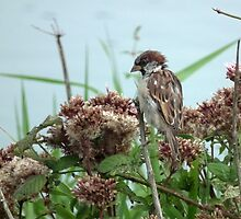 Sparrow By The River Char by lynn carter
