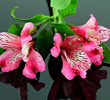 Lilies by Dipali S