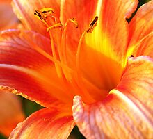 sunset flower by agawasa